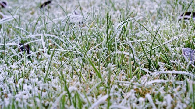 ZIMSKA BUĐ - bolest koja ubija travnjak
