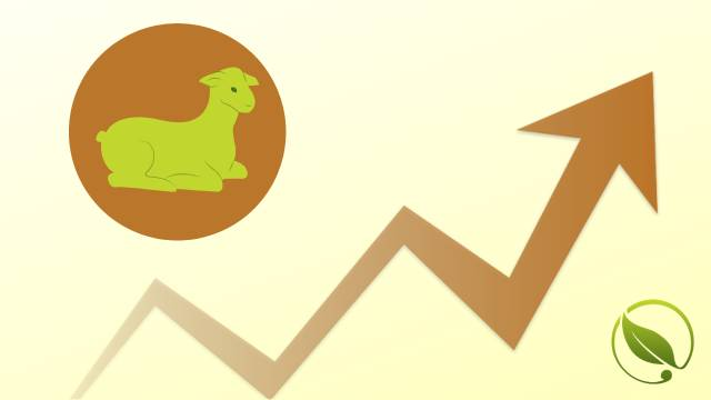 Cene prasadi i jagnjadi uporno rastu |Cene stoke