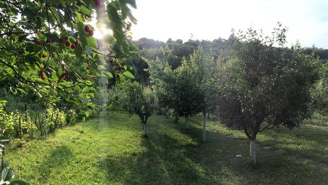 Utisci voćara iz Kolubarskog kraja: Od svih loših godina ova je najgora za voćare