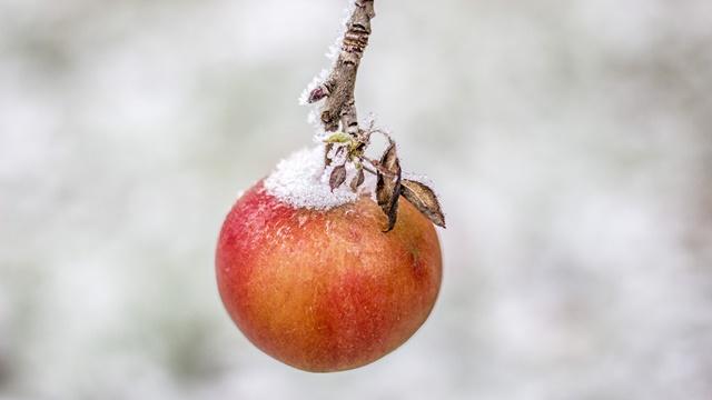 Zahlađenje i padavine pogodovali voću i ozimim usevima