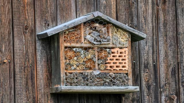 Hotel za insekte: Zašto je sve popularniji kod povrtara širom sveta