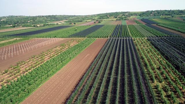 U Vojvodini gajimo maline, a na zapadu žito - Evo šta još ne radimo kako treba