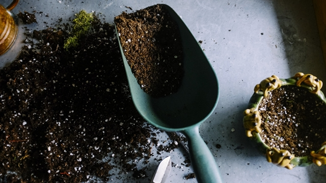 ŠTA JE PERLIT i zašto je dobar za biljke?