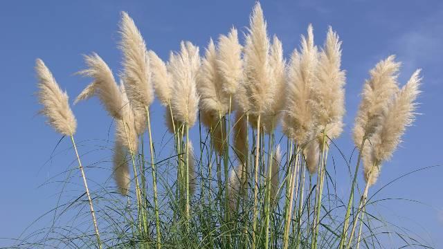 Ukrasne trave: Biljke za sva godišnja doba