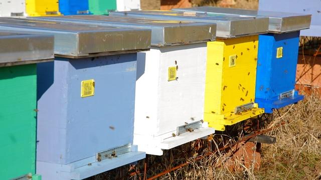Urbano pčelarstvo: Da li pčelama šteti zagađenje u gradu?