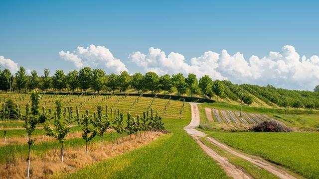 Dodela kredita za podizanje voćnjaka i vinograda u Vojvodini