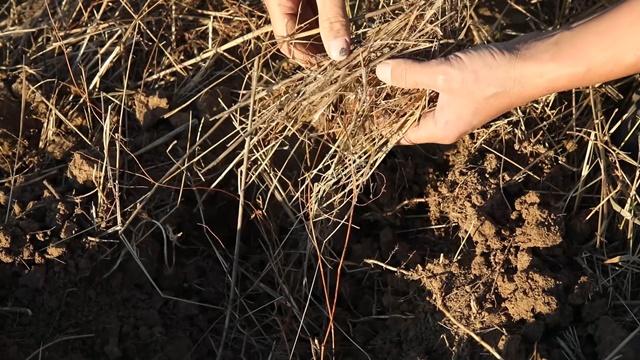 Kompost, stajnjak ili nešto treće - 4 načina da poboljšate zemljište u bašti?
