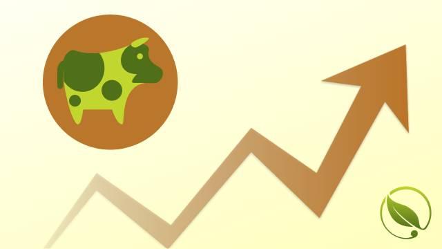 Otkupne cene tovne junadi i priplodnih junica u padu | Cene stoke
