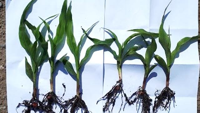 Startna đubriva - prva pomoć biljkama da bi brže napredovale