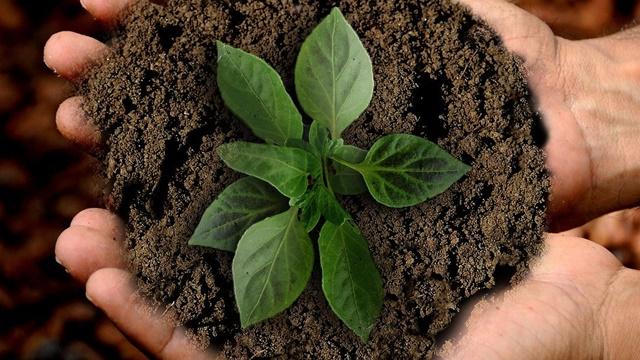 Kako da POMOGNETE zemljištu da postane PLODNIJE i prinosnije - ©Pixabay