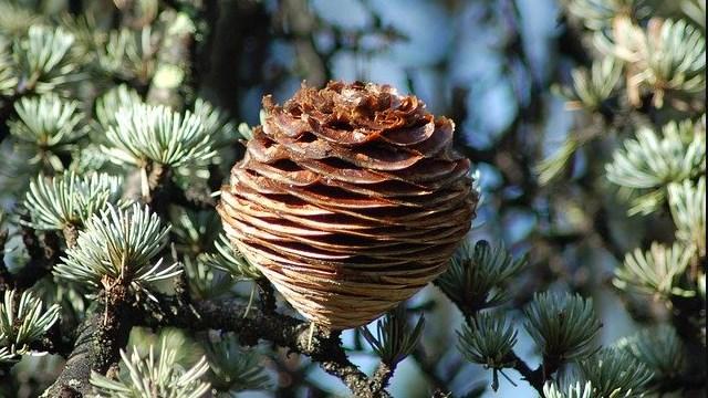 Za ovu biljku kažu da je NAJLEPŠI letnji i zimski ukras!