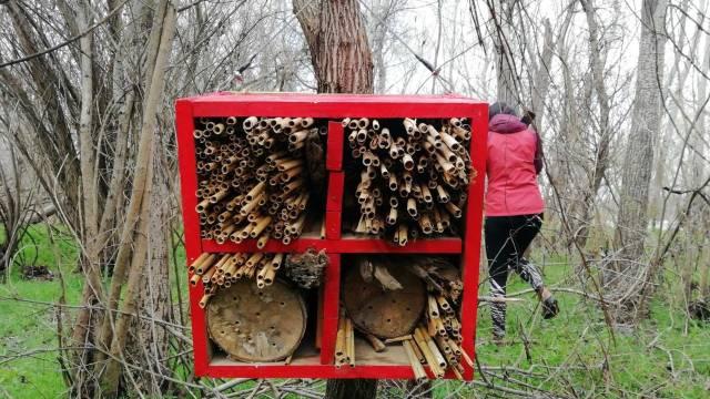 Briga o divljim pčelama: Pravljenje pčelinjih kućica od prirodnih materijala
