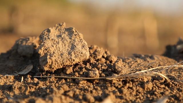 Kako da POMOGNETE zemljištu da postane PLODNIJE i prinosnije?
