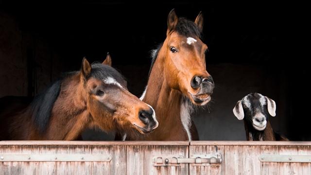 Ponašanje tokom COVID-19 - Evo šta možemo da naučimo od domaćih životinja