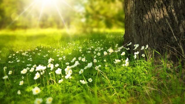 Divlji travnjak - Šareni tepih koji NE MORA da se kosi