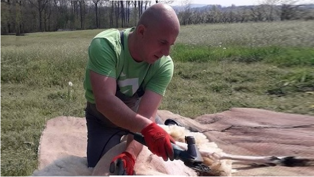 Šišanje ovaca - posao od koga još uvek može lepo da se živi