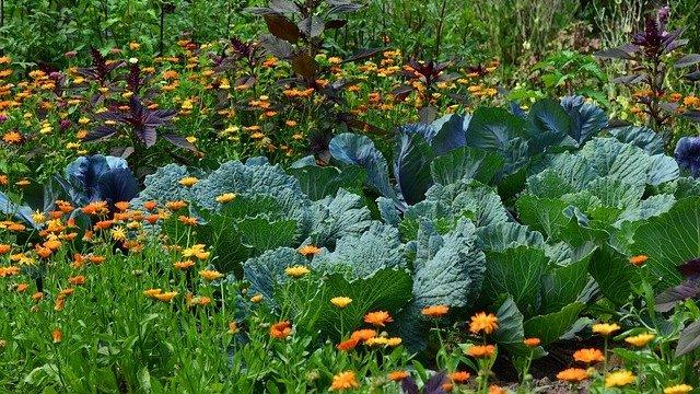 Prednosti rotacije useva u bašti sa povrćem