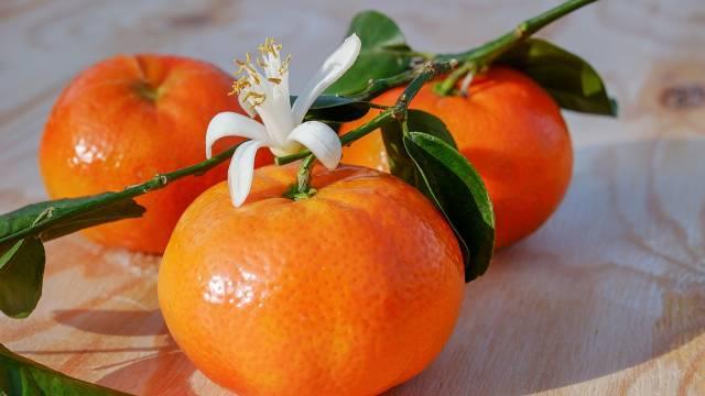 Kako se gaji klementina u saksiji: Zdravo i sočno voće koje stimuliše hormon sreće