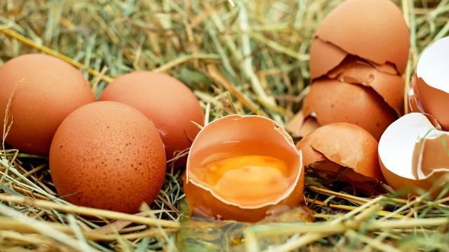 Kako da vaše koke snesu jaja sa JARKO NARANDŽASTIM žumancem?