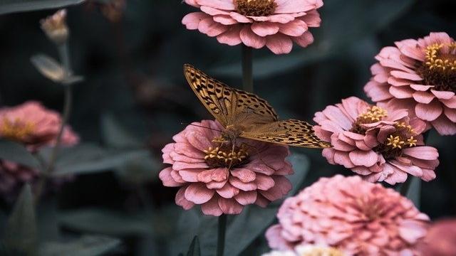 Vaša bašta će zasijati punim sjajem: Ove biljke procvetaće u junu