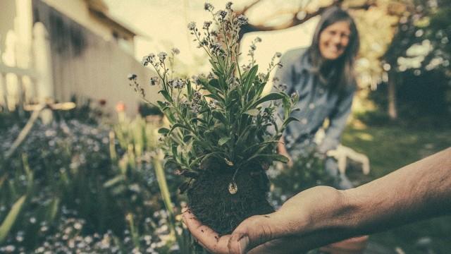 PRIRODNI stimulatori RASTA: Od ovoga će vaše biljke BUJATI!