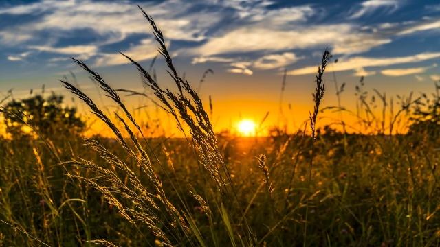 Saveti stručnjaka: Zašto baš u junu treba kositi travu?