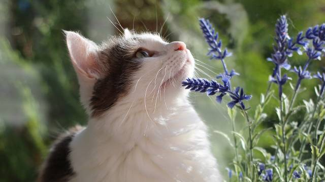 Imate mačku i volite cveće? Ove biljke možete slobodno da gajite u kući