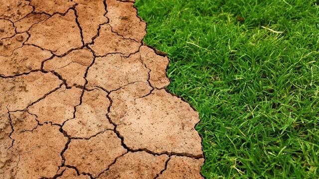 Menja se klima! Uskoro ćemo gajiti biljne vrste o kojima nismo ni sanjali! - © Pixabay