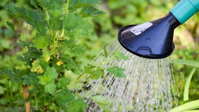 Organska bašta u susret vrelom letu: Kako uštedeti na vodi za zalivanje