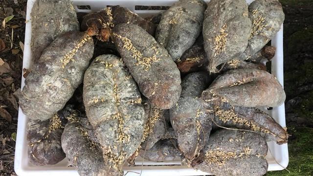 Ovo su najkvalitetniji specijaliteti od mesa koje Srbija ima! | Kulenijada u Erdeviku