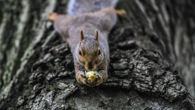 Veverice bez milosti uništavaju lešnike: Evo kako da rešite ovaj problem