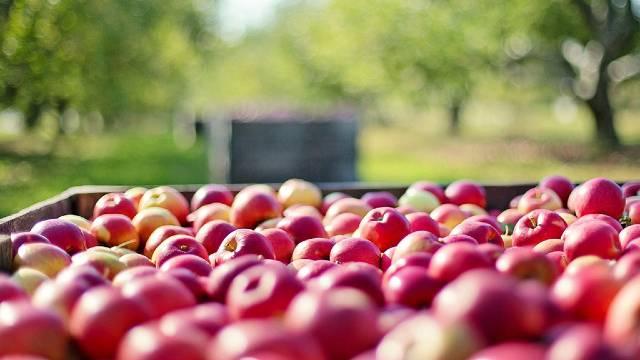 Primenite ovo rešenje i nećete se mučiti sa skladišnim bolestima jabuke