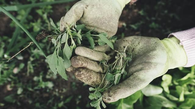 Septembar je stigao: Vreme je za pojačane radove u bašti