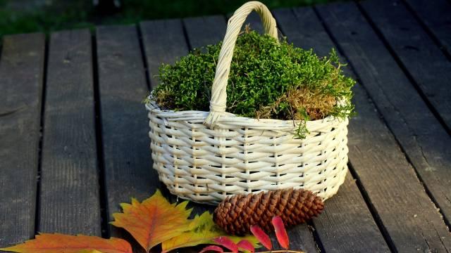 Kako da iskoristite mahovinu u bašti
