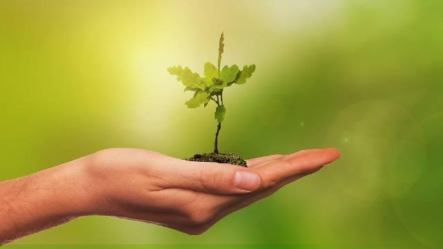 Otkrivamo: zašto se drveće sadi u jesen?-© Pixabay