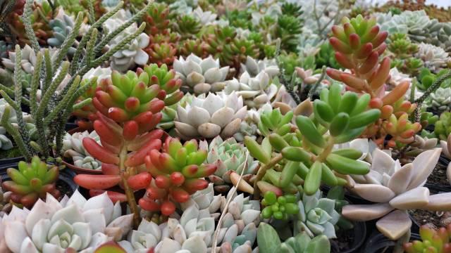 Egzotična oaza u Vrbasu: Ova porodica gaji čak 200 vrsta kaktusa i sukulenata