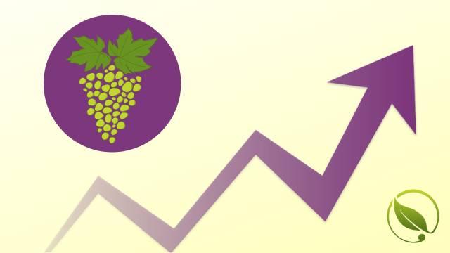 Na pijacama slabiji izbor breskve i nektarine, a bolja ponuda grožđa | Cene voća