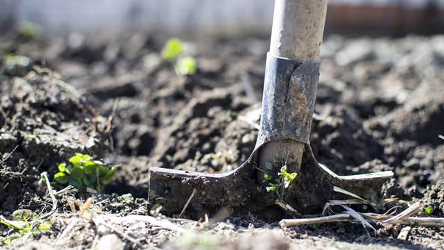 Šta raditi u bašti kada je zemlja mokra?