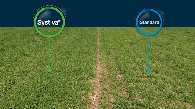 Systiva: Jedini fungicid kojim tretiramo seme a štitimo list!