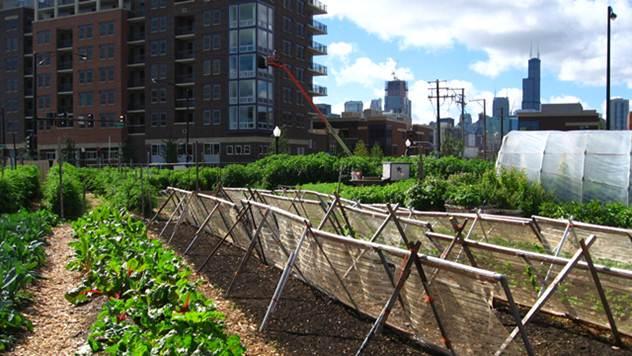 Urbano baštovanstvo:  Samo sat vremena u bašti čini čuda vašem telu - © Wikimedia