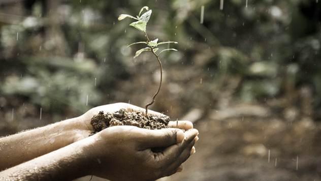 Treba nam prirodna hrana - © Pixabay