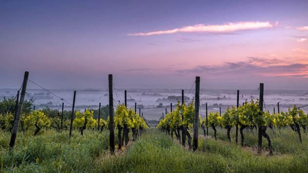 Vinograd - © Pixabay