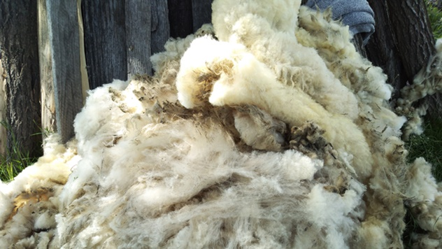 Otkup i prerada vune - © Dejan Davidović/Agromedia