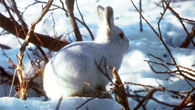 Zečevi i miševi uništavaju mlade voćnjake - ©Pixabay