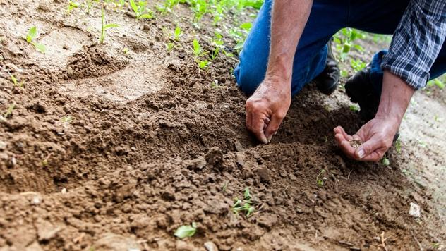 Plodno zemljište - © Pixabay