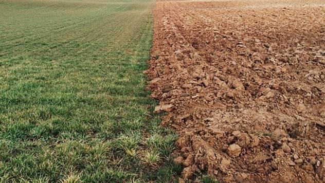 Zbog usitnjenih parcela i prinosi su manji - © Pixabay