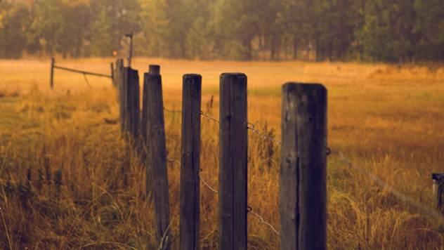 Iz ličnog iskustva: Poljoprivreda nije industrijska traka - © Pixabay