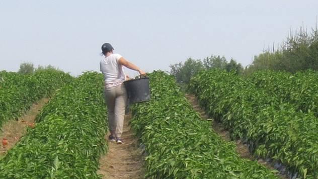 Razvod poljoprivrednika - © Agromedia