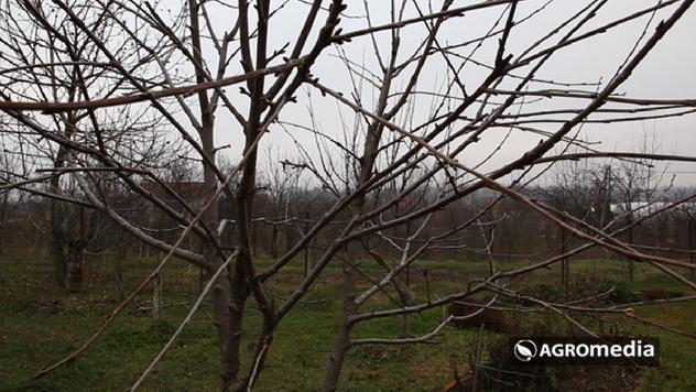 Biljke za zimsko prskanje © Agromedia