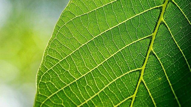 Prirodna đubriva sa visokim sadržajem azota - © Pixabay